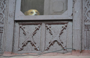 Alm window dog